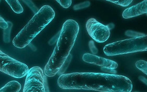 Bactérias Comedoras de Carne (Humana)